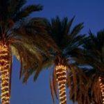 Ejemplo de manguera led colocada en arboles o palmeras ejemplo